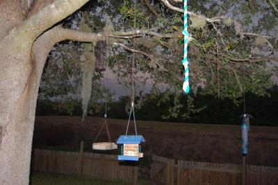 bird-feeder-missing1