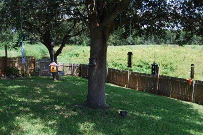 trees and birdfeeders