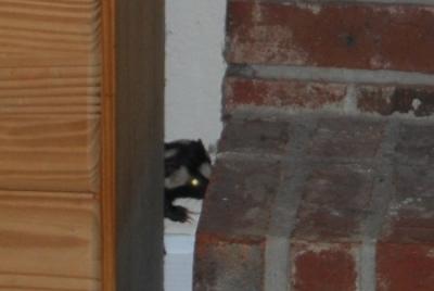 skunk zoom2