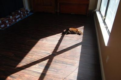 lazy cat in sunbeam