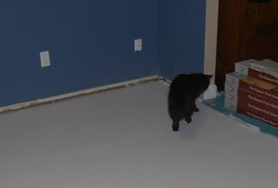 playroom floor wet sealer black cat