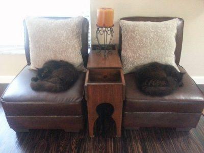 lazy cat symmetry
